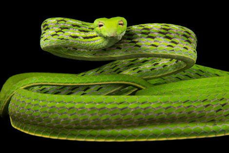Check out These Amazing Snakes