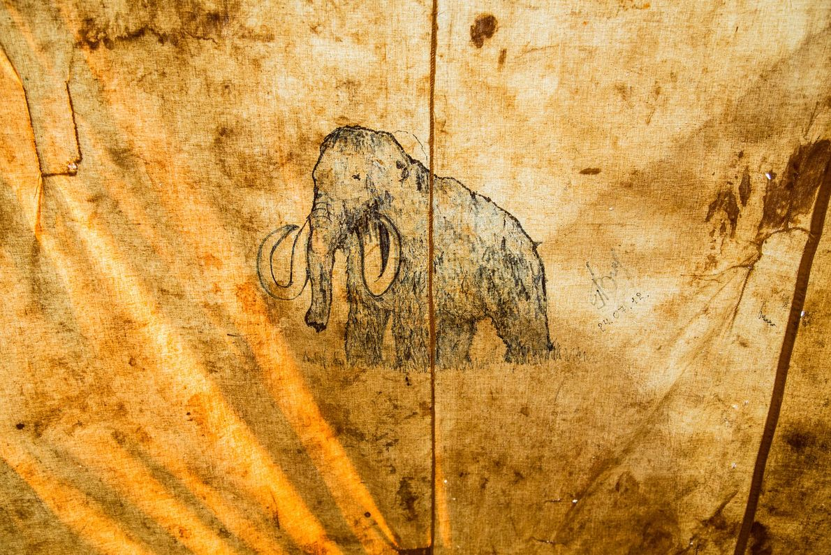 A mammoth drawn on the inside of a tent.