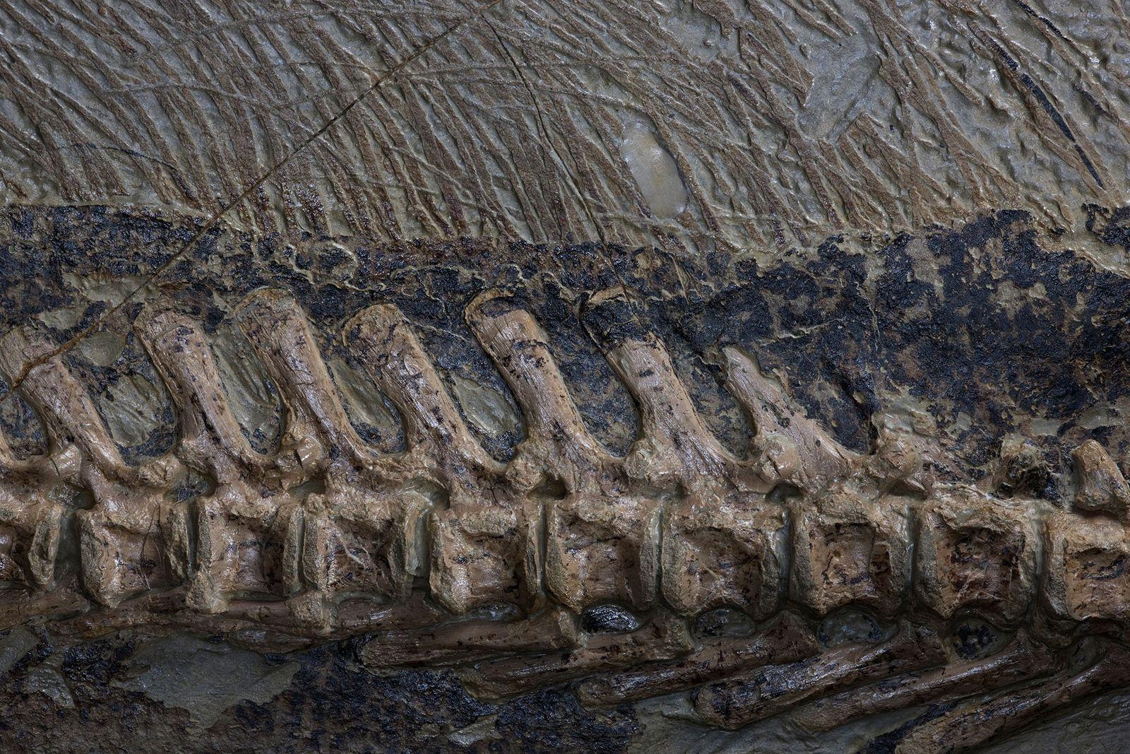 Fossils of oddball crocodile relative found in Texas suburb