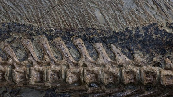 These are some of the world's most spectacular dinosaur fossils