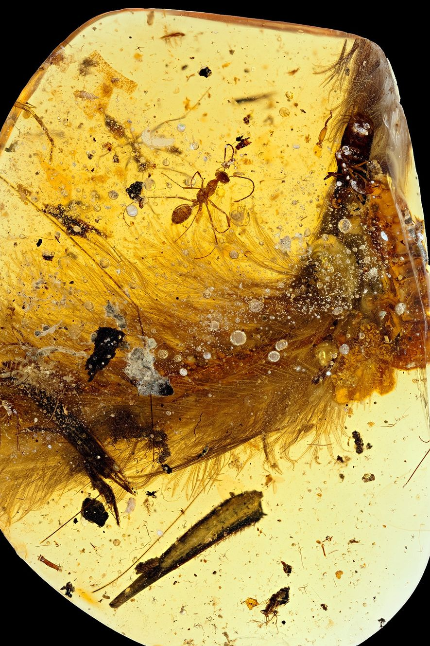 The amber sample, from a mine in Myanmar, had already been partially shaped into an oval ...