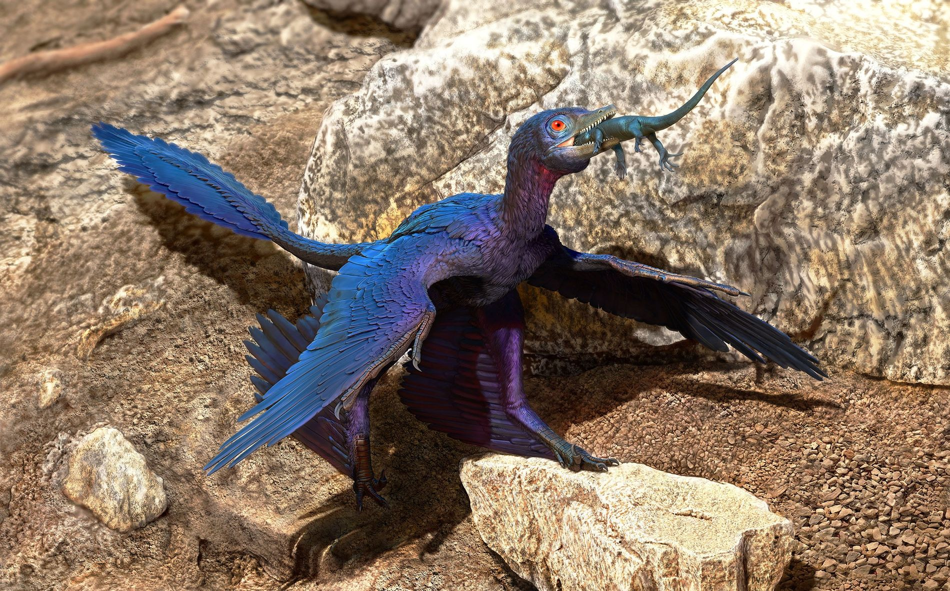 More than 120 million years ago in what is now northeastern China, a feathered dinosaur called ...