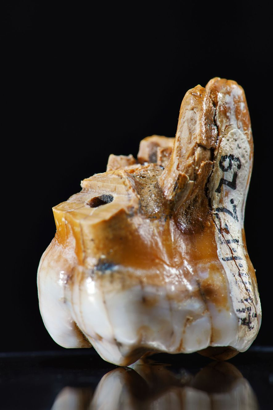 Scientists have extracted all we know about Denisovans from just three teeth and a pinky bone.