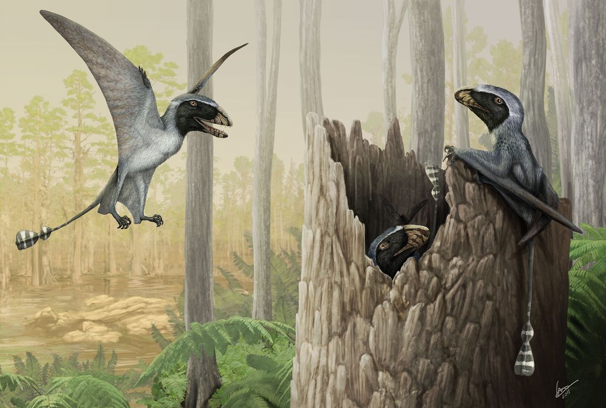 """A Mob of Dimorphodon"" Here, the Jurassic pterosaur 'Dimorphodon macronyx' seeks food and shelter in an English ..."