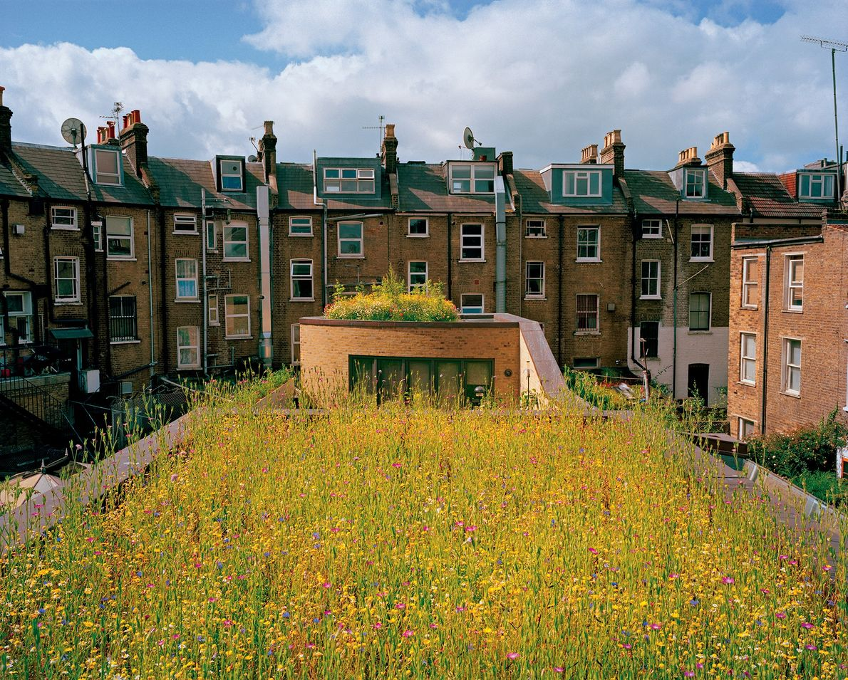 In London, architect Justin Bere planted a wildflower meadow atop his solar-powered home. His dash of ...