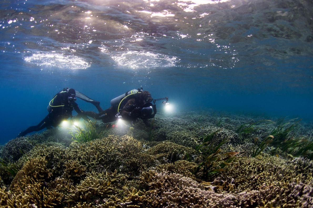 Pristine Seas divers study the rich coral and seagrass life around Palau.