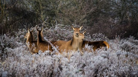 Can Rewilding Bring Nature Back to Modern Britain?
