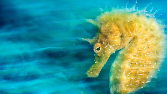 11 Award-Winning Pictures Reveal Hidden Underwater World