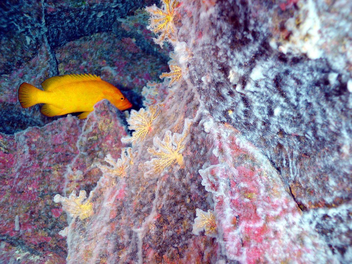 Microbial mats coat a coral reef in a bizarre overlap of habitats 190 metres (623 feet) ...