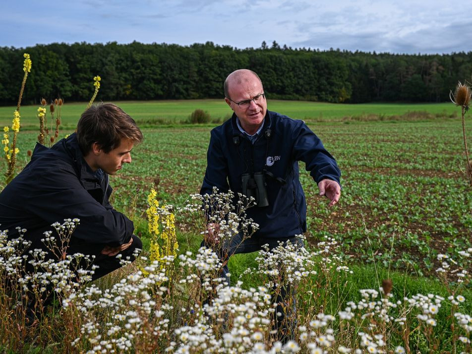 A grassroots push to save disappearing birds and bees forces change in Germany