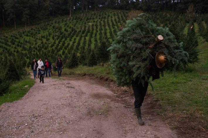 The Vallatoro Camas family travelled four hours from the city of Huehuetenango to Tecpán, Guatemala, to ...