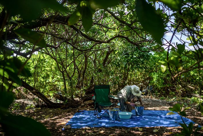 Tom King, former chief archaeologist for TIGHAR, checks soil recovered from a site on Nikumaroro where ...