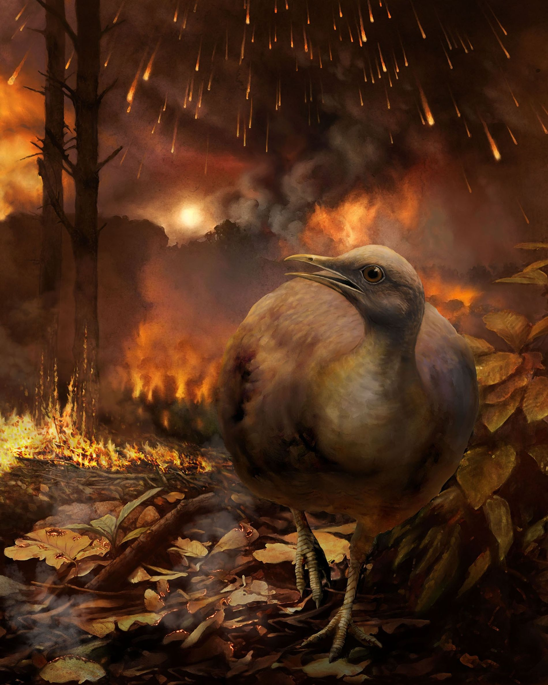 An illustration shows a hypothetical surviving bird lineage—small-bodied and ground-dwelling—fleeing a burning forest after the asteroid ...