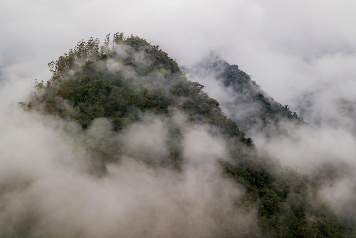 The tropical rainforests of western Ecuador are part of the Chocó region, a biodiversity hotspot. Below ...