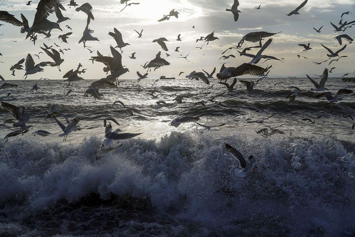 Gulls dodge the waves on the edge of the Sea of Marmara. Will the new canal ...