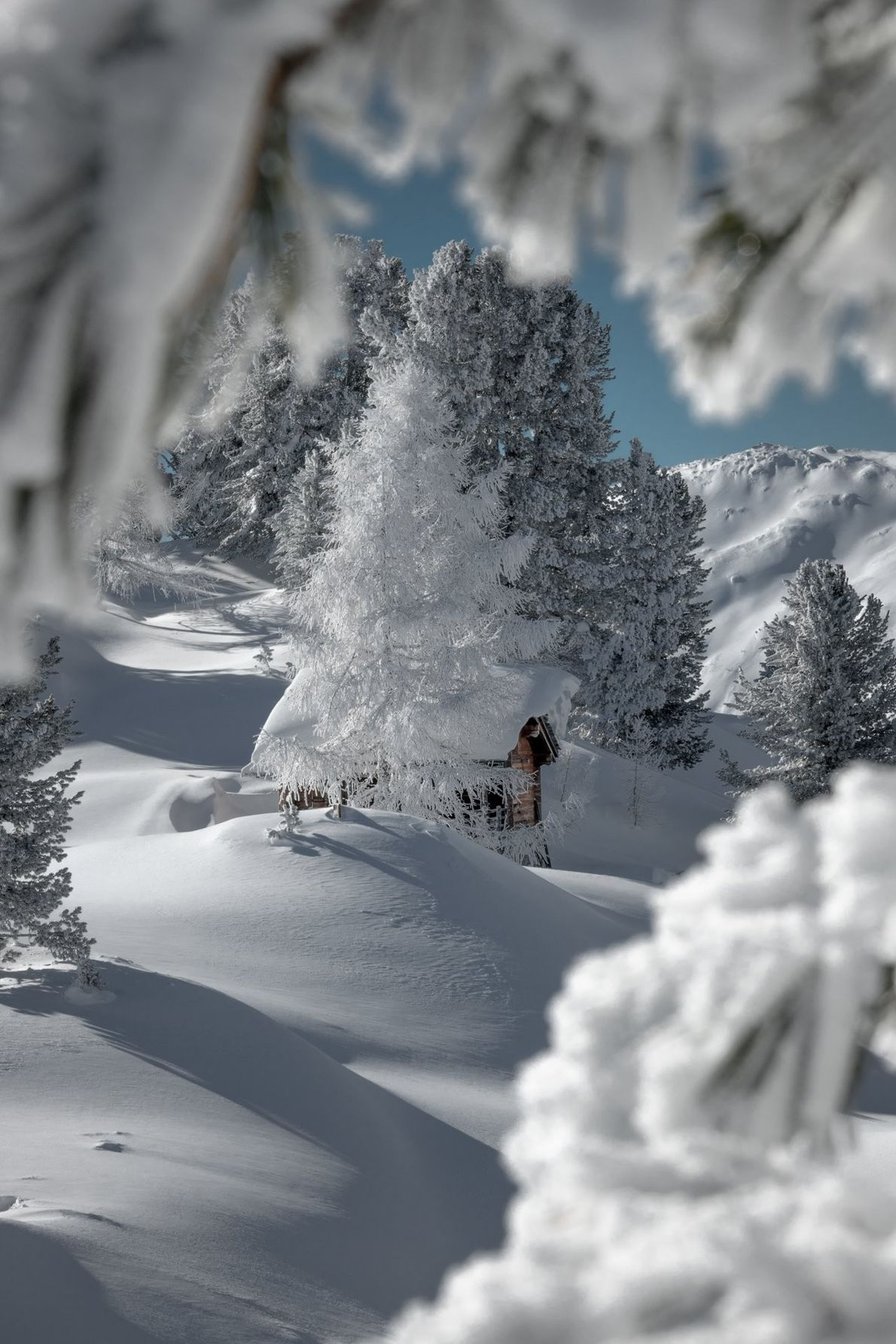 """""""This is somethiing I really love...all the trees in deep white, everything covered with snow and ..."""