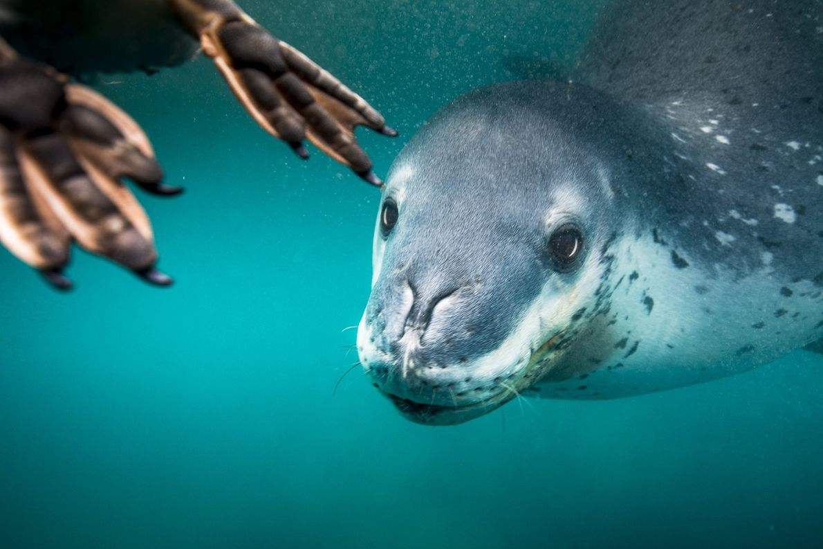 Your Shot photographer Rita Kluge made this image on her last day in Antarctica of a ...