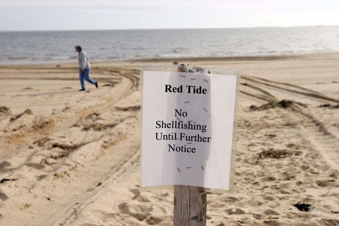 Notices are posted along the coast where red tides force closures to shellfish fishing, seen in ...