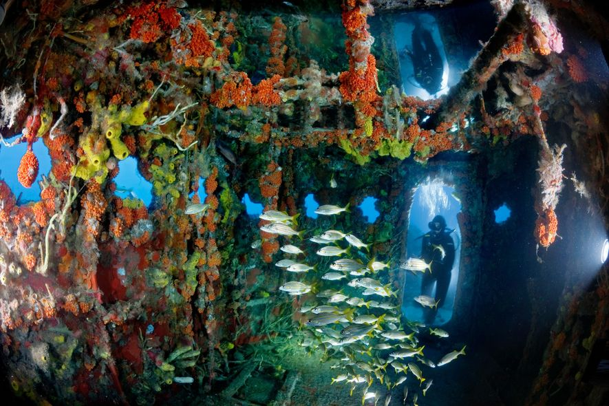 The U.S. Coast Guard Duane, a shipwreck off Key Largo, Florida, is an artifical reef for ...