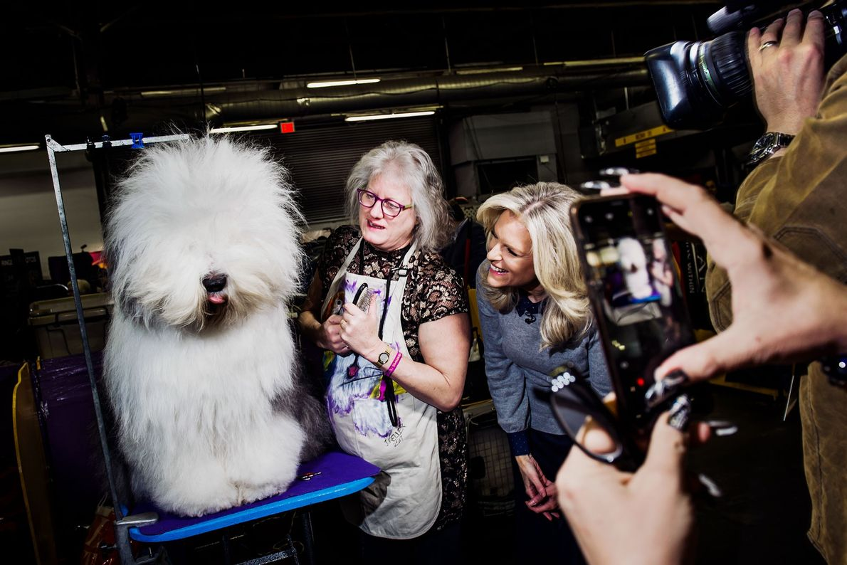 Some dogs, especially those that are large and have thick hair, require extensive grooming.