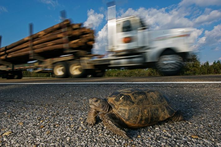 Wildlife crossings are needed for large mammals to avert deadly and expensive car crashes—but smaller animals, ...