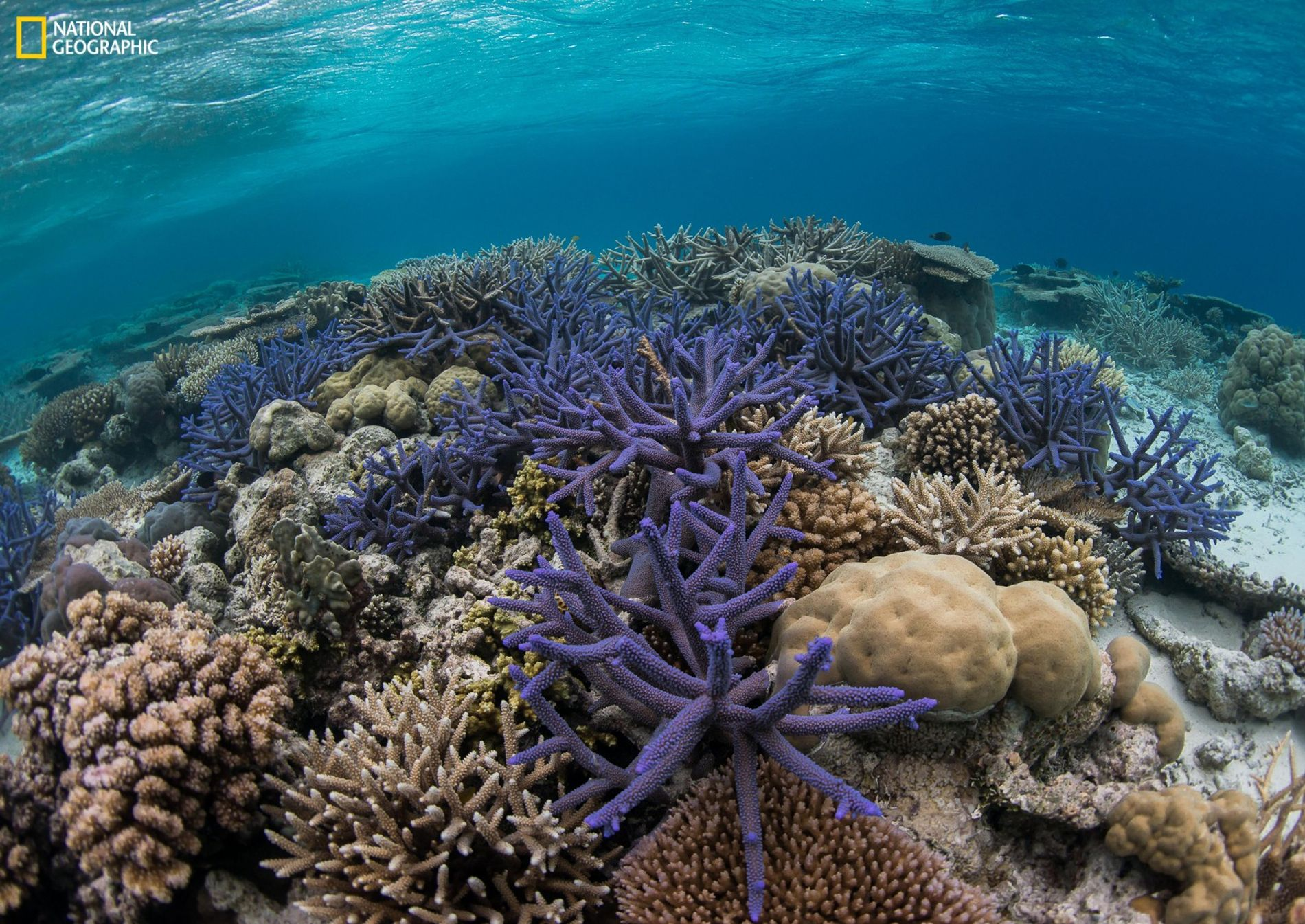 Major new initiative announced to tackle ocean's plastic pollution