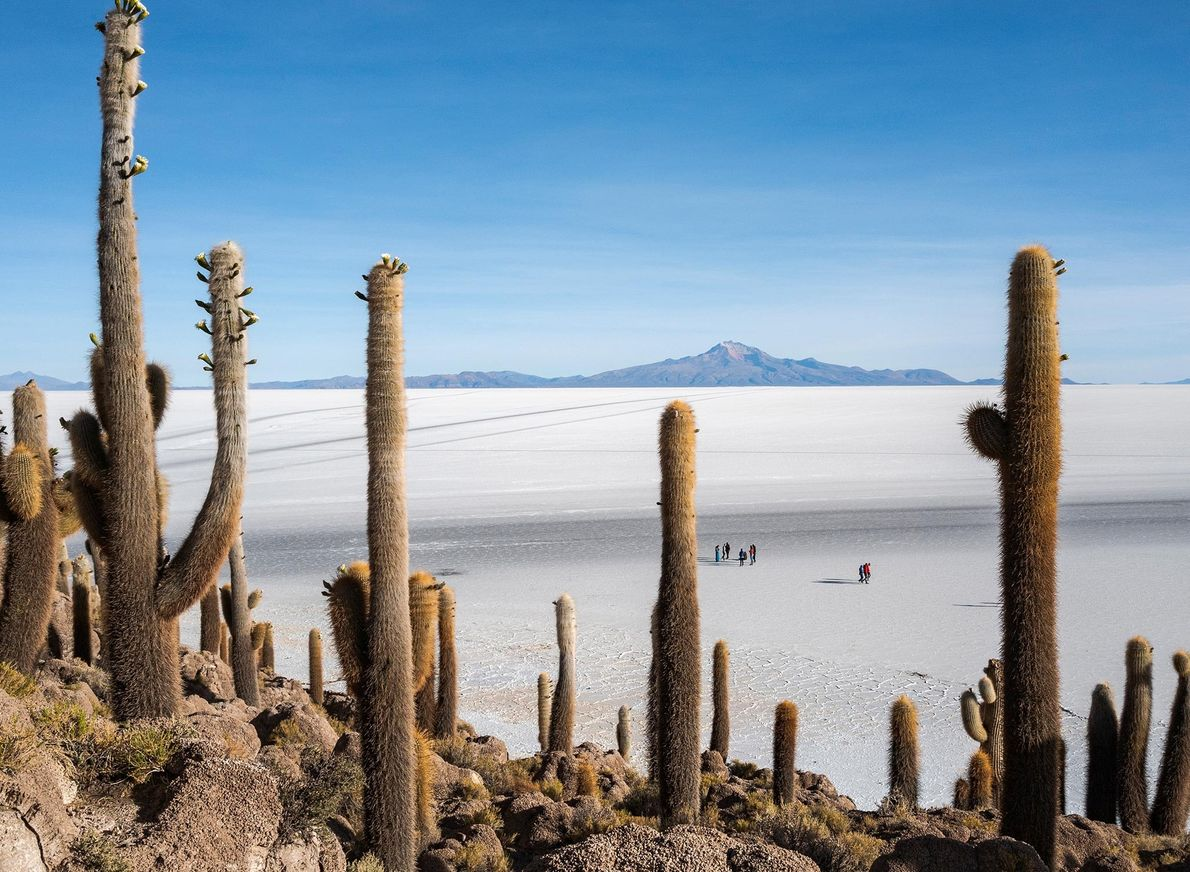 Salar de Uyuni, tucked into the Bolivian Andes, is the largest salt flat on Earth. It's ...