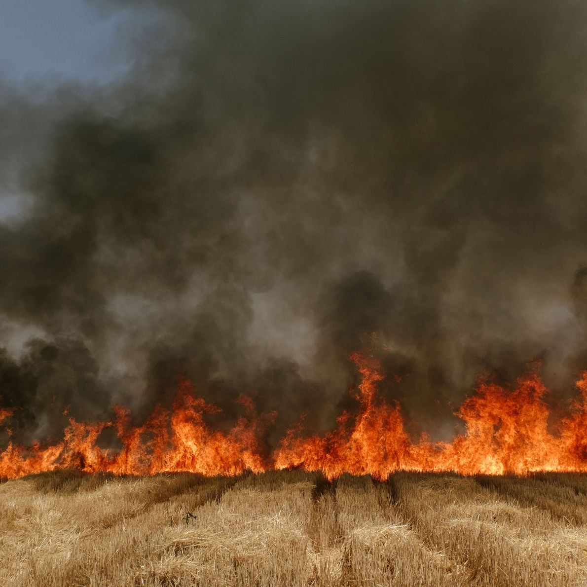 Fire burns through a wheat field in Madhya Pradesh, India. The region has experienced worsening drought ...