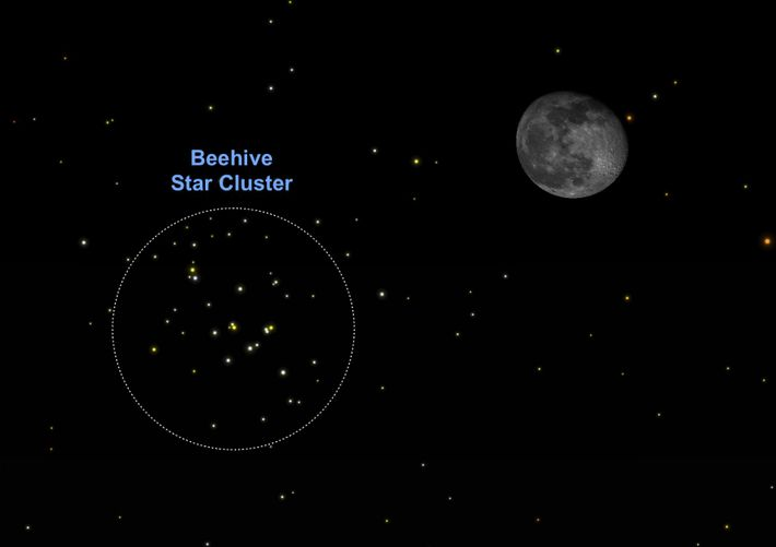 The moon will hang near the Beehive star cluster on Christmas Eve, December 24.