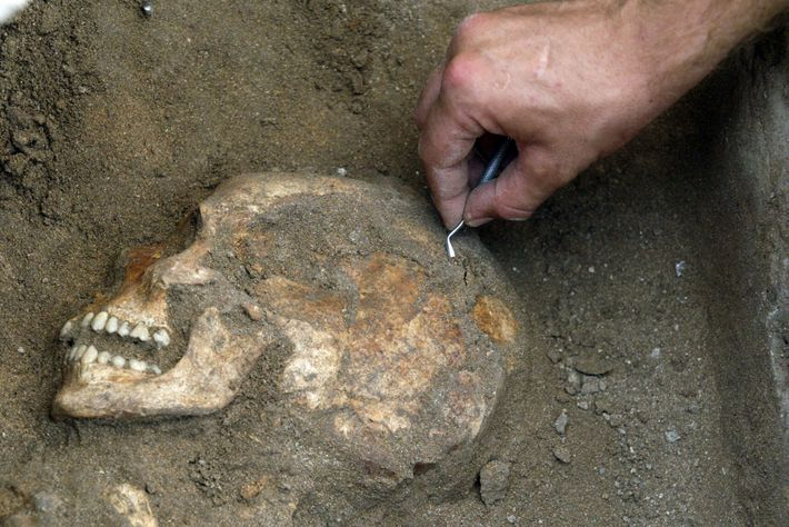 An archaeologist unearths the skull of an inhabitant of Sidon, a once-thriving Canaanite port on the ...