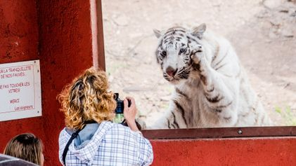 Why people risk their lives for the ultimate animal selfie