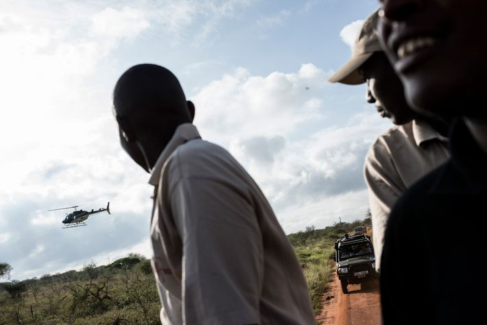 The collaring team moves towards where an elephant was spotted by an airplane and tranquilised by ...