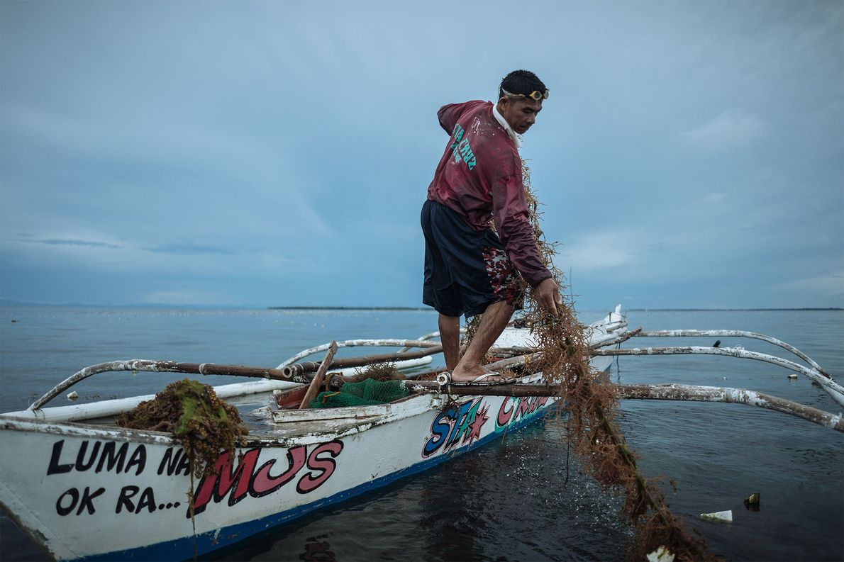 Seaweed is another product harvested locally, which also depends on ocean health.  ...