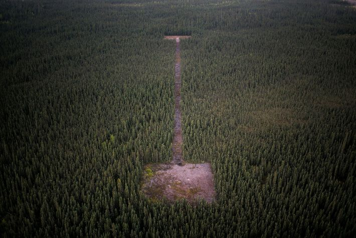 The oil industry uses cut lines in the forest like this one to search for underground ...