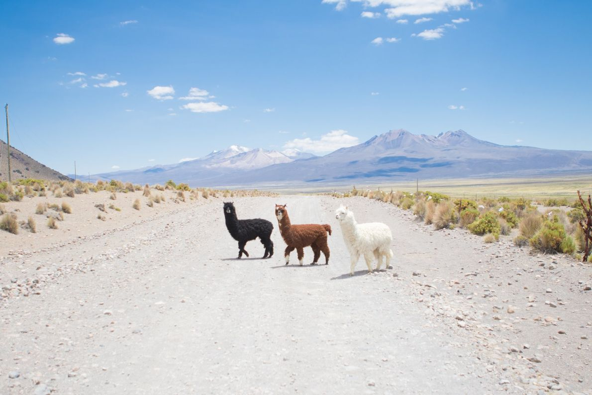 Your Shot photographer Sam Parkes made this photo in the far west of Bolivia. He writes, ...