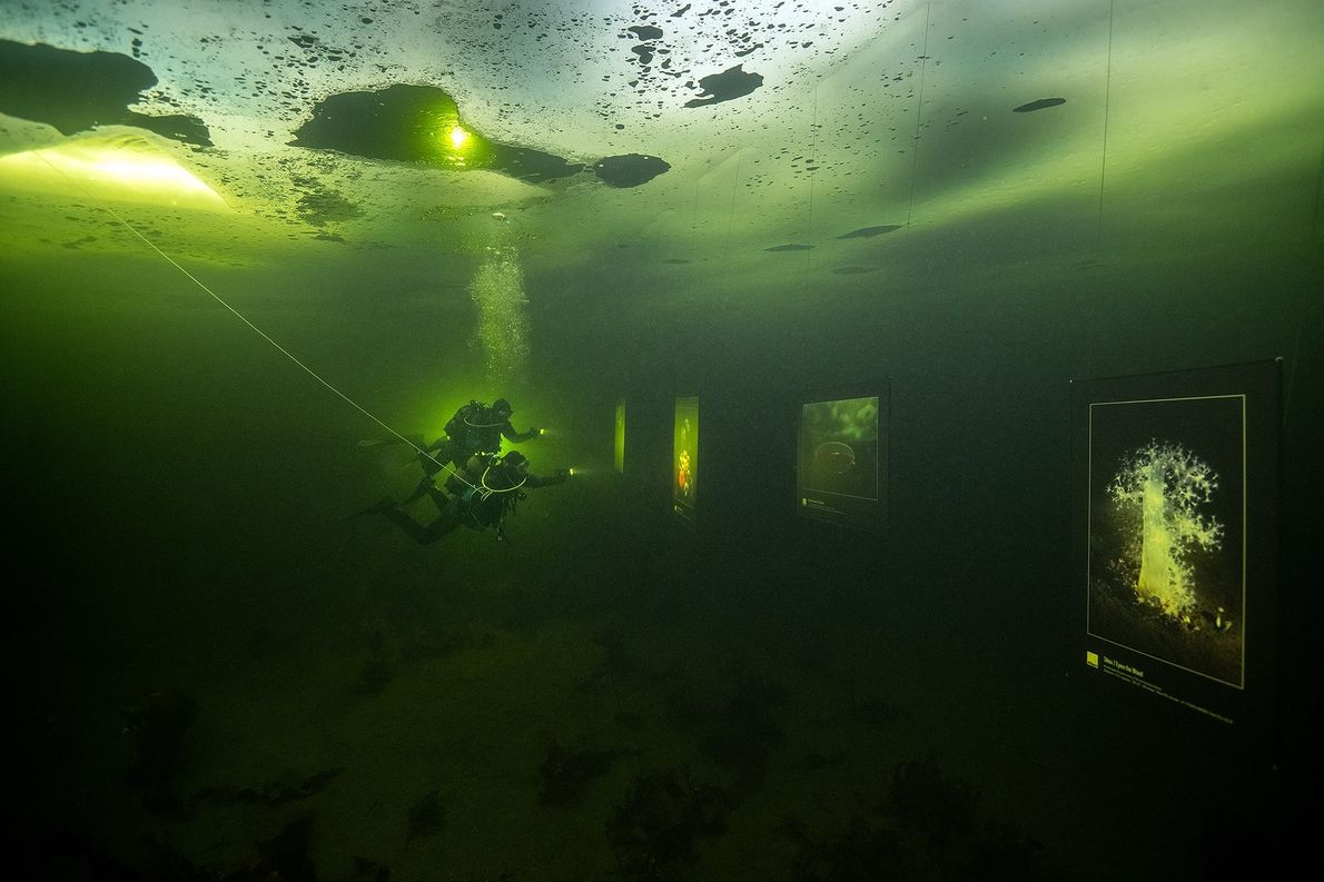 Your Shot photographer Viktor Lyagushkin photographed his underwater exhibition in the Arctic Circle of the White ...