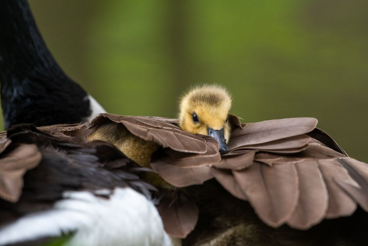 """""""I made a little friend at the Brandywine River the other morning,"""" writes Your Shot photographer ..."""