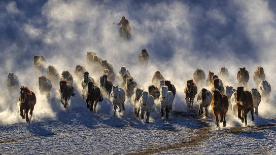 Your Shot photographer Kiah Hwa Ng documented this moment as horses gallop through a grassland in ...