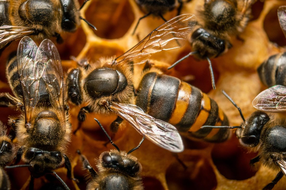 Your Shot photographer Reyda Hamadou was able to make this picture of a queen bee while ...