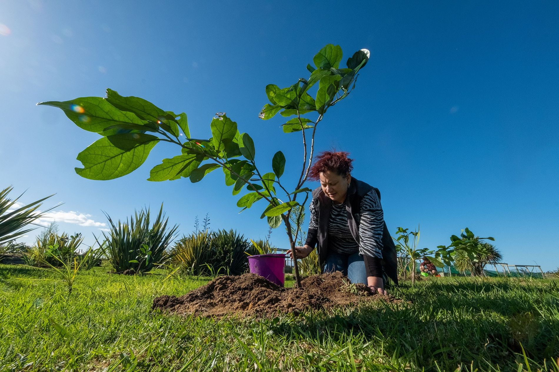 Sheridan Waitai waters a kaikōmako sapling, one of 80 planted by her and other members of ...