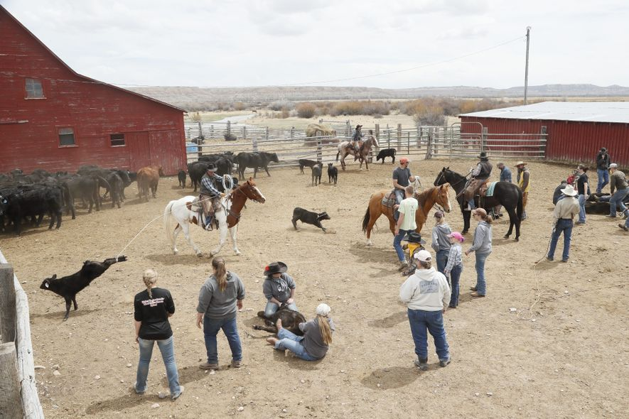 Conflict between ranchers, conservationists, and developers complicates efforts to protect sage grouse, but a coalition of ...