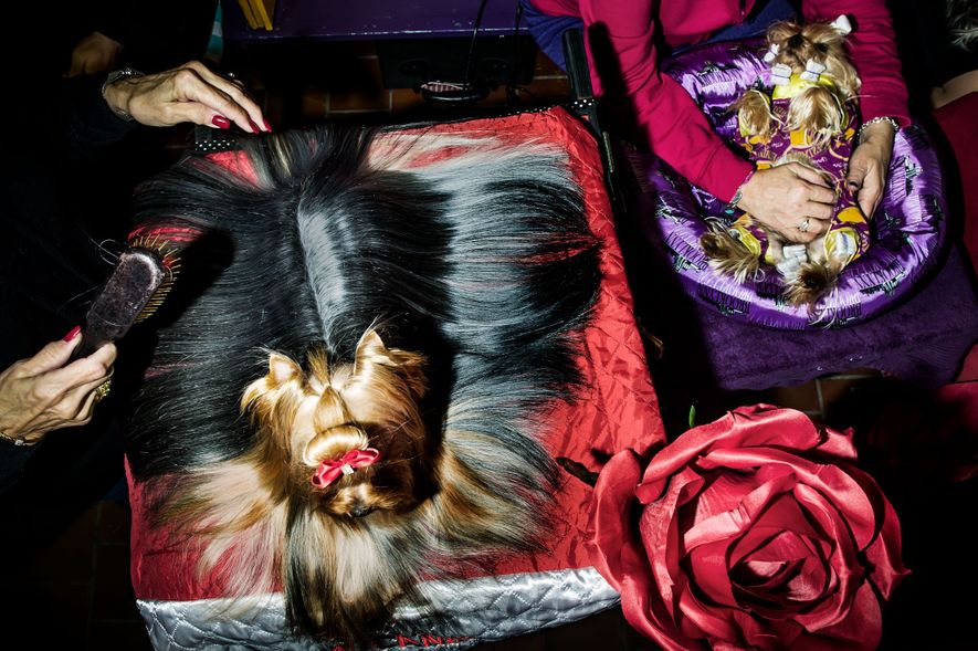 Behind the Scenes at the Glamorous Westminster Dog Show
