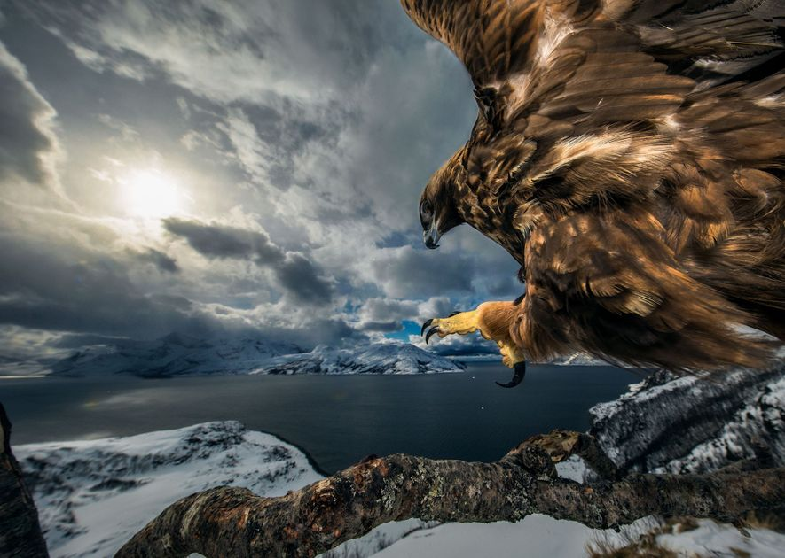 Wildlife Photographer of the Year 2019: See the Winning Shots