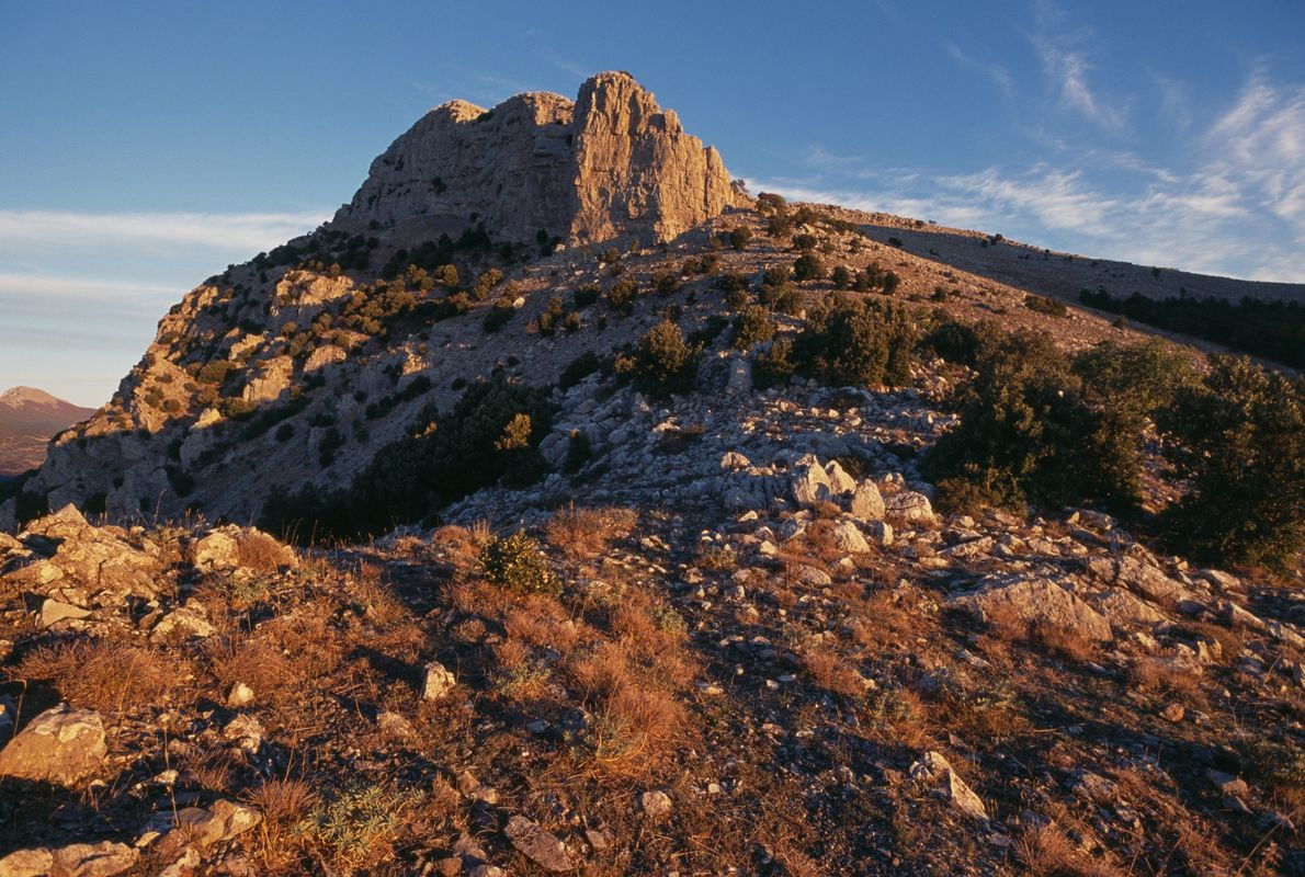 The high and remote mountain peaks in Pollino National Park helped preserve the Italus pine for ...
