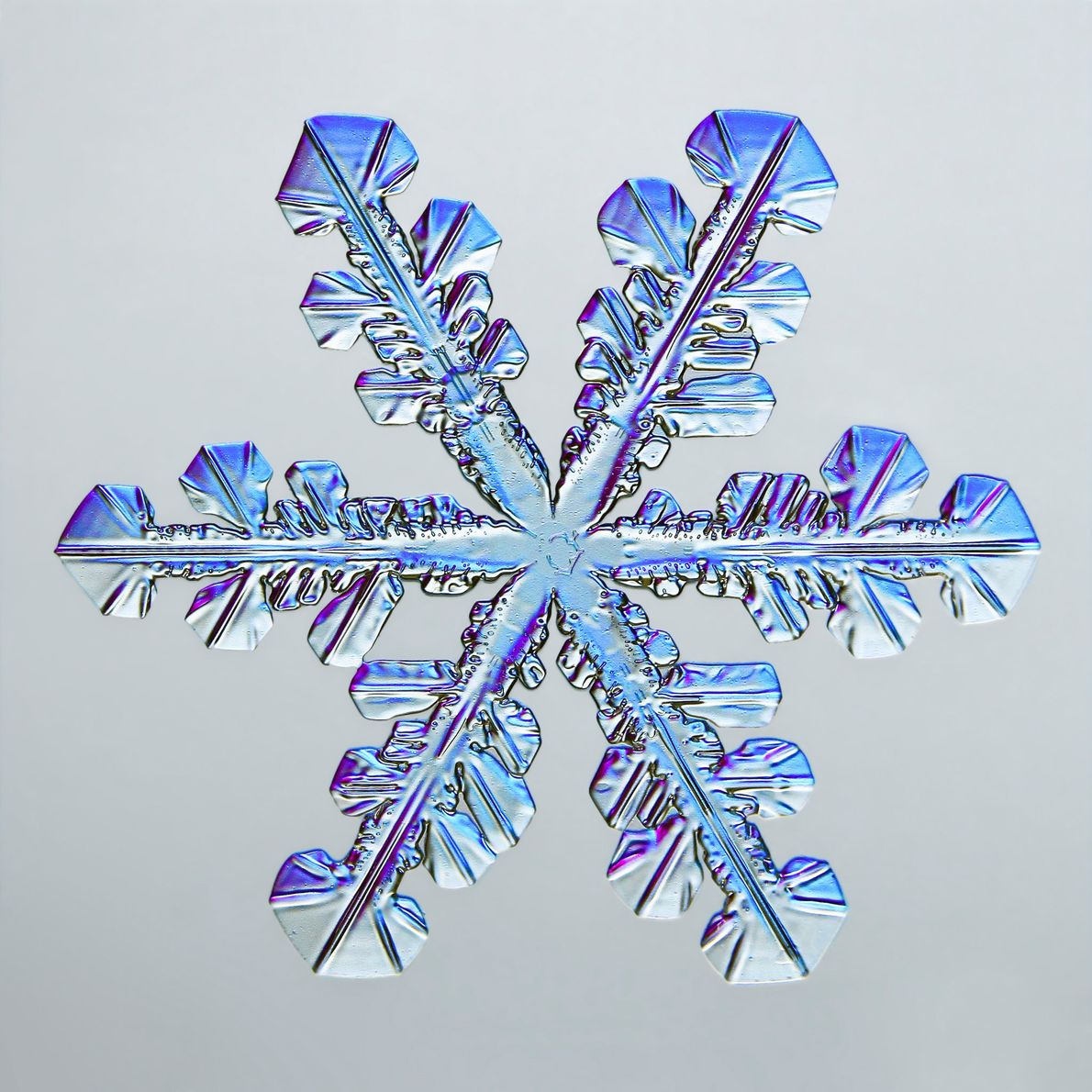 A snowflake's many hexagonal facets gleam blue and purple, thanks to illumination provided by Vermont-based photographer ...