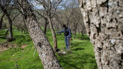 Iraq races to save last of Middle East's forests from burning