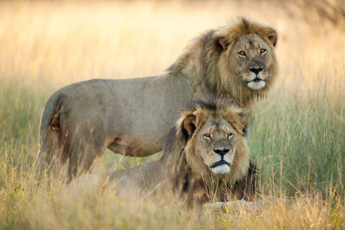 Cecil and Jericho shared two prides.
