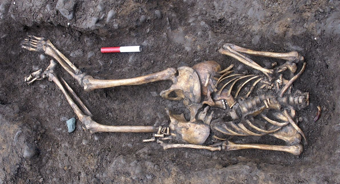 Unusually, many of the bodies in the Driffield Terrace cemetery were beheaded. Some archaeologists think that ...