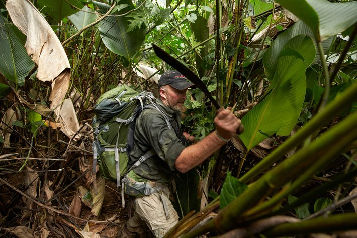 Former British SAS soldier Andrew Wood hacks through thick foliage to clear a way for scientists ...