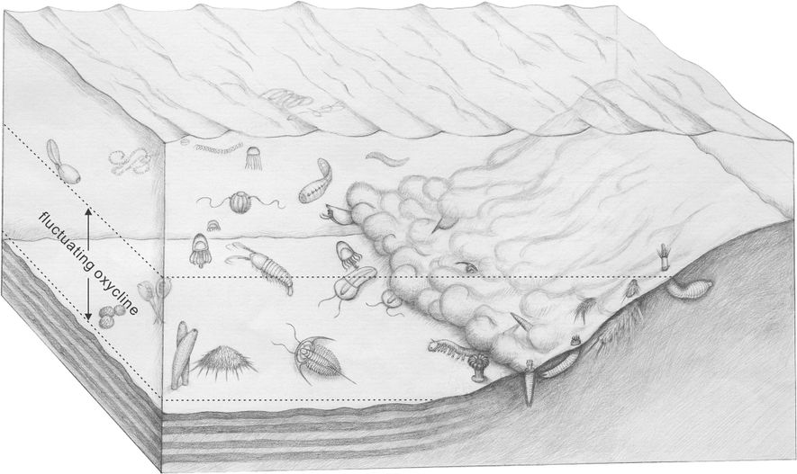 This drawing of the Qingjiang biota illustrates how scientists think the fossils were preserved. More than ...
